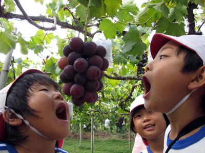 山口県防府市の幼稚園 玉祖幼稚園(たまのやようちえん)カリキュラム 食育 育てて食す体験